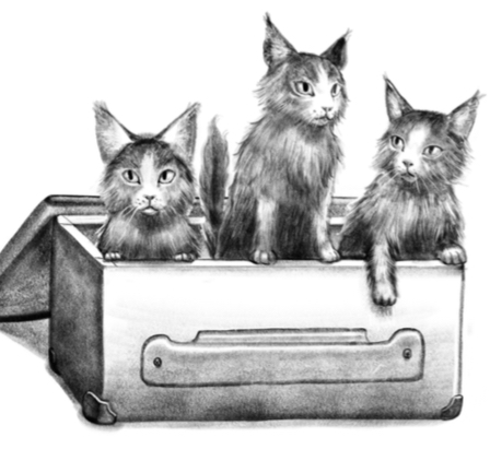 drawing of three kittens looking out of a crate